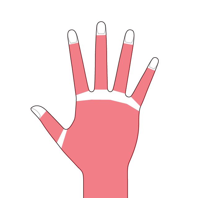 両手の甲/指