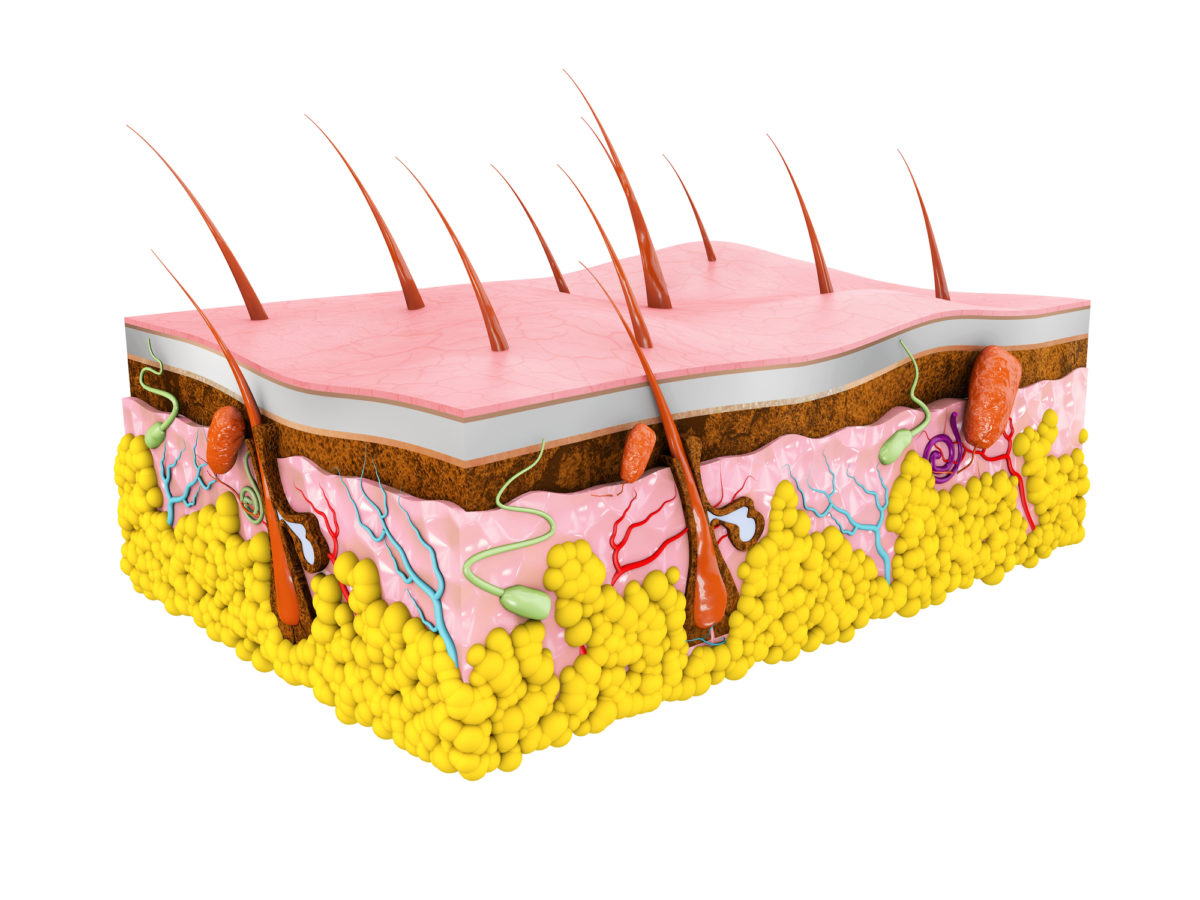 硬毛化や増毛化の仕組み